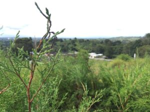 Árboles frutales y silvestres